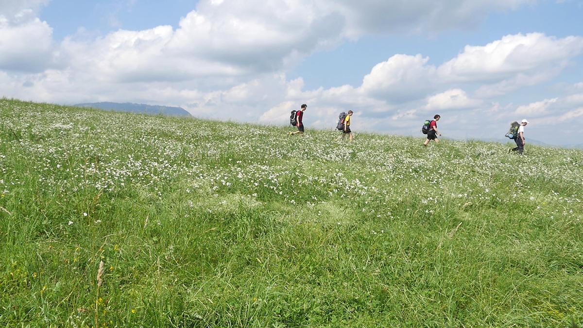 Grazrand: über die Wiese mit Schöcklblick
